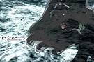 Portada de la serie de ilustraciones: Sirenas