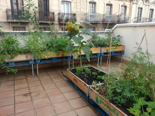 Huerto en la azotea de la Comunidad de vecinos de San Luis. Fuente: growinpallet.com