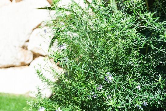 Jardín subtropical en Finestrat . Benidorm . Alacant . España